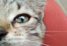 Det är mitt favorit- öga för katt` s royaltyfri fotografi