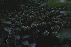 Det är mycket gröna växter i skogen arkivfoto