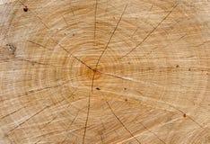 Det åldrades red ut avsnittet av ett klippt träträd med sprickor och cirklar sågade ner från träna royaltyfria bilder