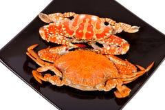 Det ångade havet fångar krabbor i svart maträtt på vit Royaltyfria Bilder