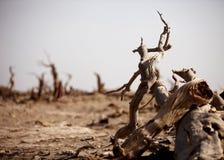 Det öken hjälte-vissnade trädet i Ejinaqi Royaltyfri Foto