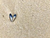 Det öppna skalet för den blåa musslan i en hjärtaform ligger på havsstranden royaltyfri fotografi