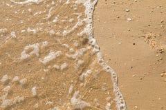 Det öppna snäckskalet på ett Pebble Beach som plaskas av ett hav, surfar royaltyfri foto