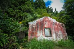 Det övergav huset fördärvar djungelskogdystopia royaltyfri foto