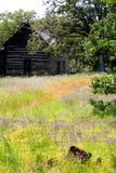 det övergivna kabinfältet blommar det wild hemmanet Royaltyfri Fotografi