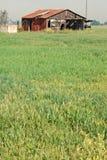 det övergivna ladugårdfältet sitter Arkivbild