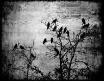 Det abstrakta cirkelfotoet ravens fågelblach och vitt gotiskt effektträ stock illustrationer