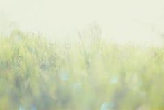 Det abstrakta fotoet av ljusbristningen bland gräs och blänker bokehljus bilden är suddig och filtrerad royaltyfri fotografi