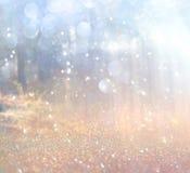 Det abstrakta fotoet av ljusbristningen bland träd och blänker bokehljus bilden är suddig och filtrerad royaltyfri foto