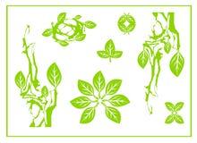 Det abstrakta gröna bladet, brunnsorten, det stam- symbolet, yoga, cirkelblad sjunger, naturdesignen, grönt te royaltyfri illustrationer
