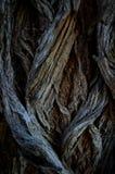 Det abstrakta trädet rotar Arkivbild