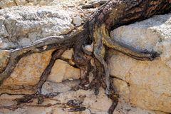 Det abstrakta trädet rotar arkivbilder