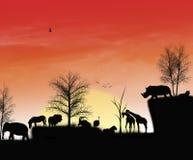 Det afrikanska solnedgångögonblicket med dess atmosfär Arkivfoton