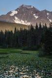 Det alaskabo sommarlandskapet - snöa korkade berg, skogar, liljadammet Arkivbild