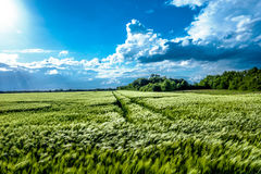 Det annat gröna fältet royaltyfri foto