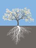 Det Apple trädet i vår med rotar Royaltyfria Foton