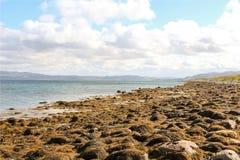 Det arktiska havet Fotografering för Bildbyråer