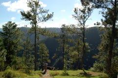 Det Belize berget sörjer Ridge Forest Reserve Arkivbild