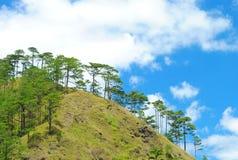 Det Benguet berget med sörjer träd Arkivbilder