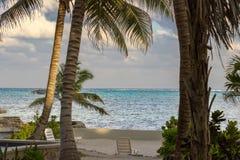 Det blänka karibiska havet ställer in en bedöva bakgrund till palmträd och lövverk på kusten av gråambra Caye, Belize royaltyfria bilder