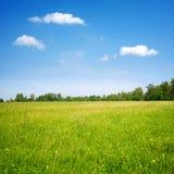 det blåa fältet blommar skyen Royaltyfri Fotografi