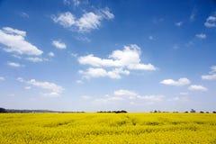 det blåa fältet våldtar skyen Fotografering för Bildbyråer