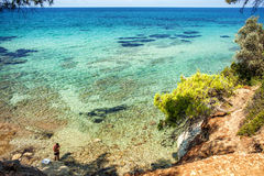 Det blåa havet och sörjer träd Royaltyfria Bilder