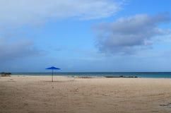 Det blåa paraplyet och tömmer stol på en strand i Aruba Fotografering för Bildbyråer