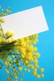 det blanka kortet blommar mimosaen Royaltyfri Fotografi