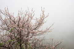 Det blomstra trädet Royaltyfria Bilder