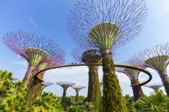 Det botaniskt av trädgården vid fjärden i stad på Singapore Arkivfoto
