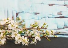 Det Bradford Pear trädet blommar framme av den gamla väggen fotografering för bildbyråer