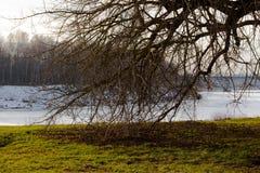 Det branchy trädet Royaltyfri Fotografi