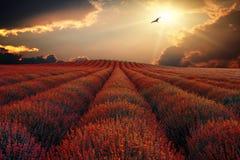 Det bruna fältet 1 Royaltyfri Foto