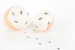 Det brutna ägget beskjuter med etiketten markerar insida- och fågelungefotspår arkivbild
