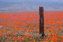 Brutet staket och wild blommor Arkivbild