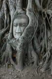 det buddha huvudet rotar omgivet Arkivfoto