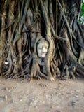 det buddha huvudet rotar treen Arkivbild