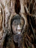 det buddha huvudet rotar treen Royaltyfria Foton