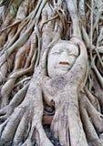Det Buddha huvudet under tree rotar royaltyfria bilder