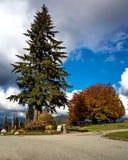 Det Burnaby berget parkerar royaltyfri foto
