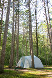 Det campa tältet sörjer in trädträn upp nord Arkivfoto