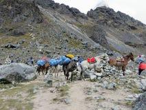 Det Cusco landskapet, Peru - May 8th, 2016: En ung grupp av internati arkivbild