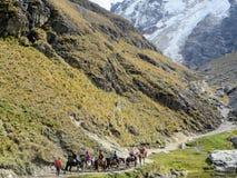 Det Cusco landskapet, Peru - May 8th, 2016: En ung grupp av internati royaltyfri bild
