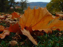 Det döda bladet på jordningen i slotten parkerar av Cesky Krumlov Royaltyfri Bild