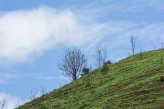 Det döda trädet på berget av gräs Royaltyfria Bilder