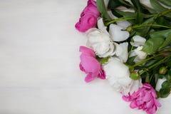 Det dekorativa kortet med vita och rosa pioner blommar royaltyfri foto