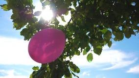 Det Derovo äppleträdet dekoreras med en ballong, solfackla Festlig garnering av barns ferie med ballonger stock video