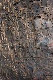 Det detaljerade fragmentet av den texturerade trätabellen i seminariet med den mäktiga strukturen, bakgrund, vintate, closeup Fotografering för Bildbyråer
