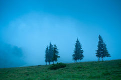 Det dimmiga morgonlandskapet med sörjer trädhöglandet Fotografering för Bildbyråer